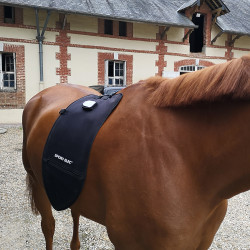 Appareils Force Tonic Equin
